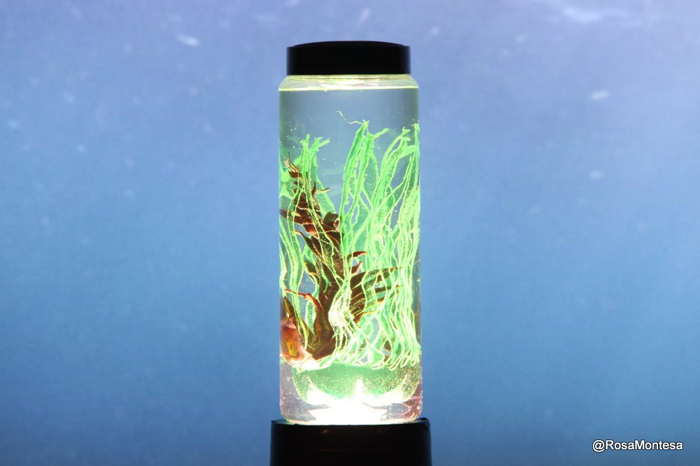 Laboratorio de algas y otros especímenes marinos con botellas de plástico