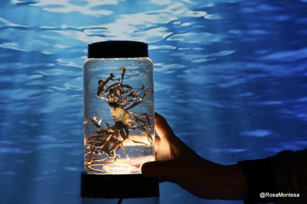 Laboratorio de especímenes marinos de botellas de plástico