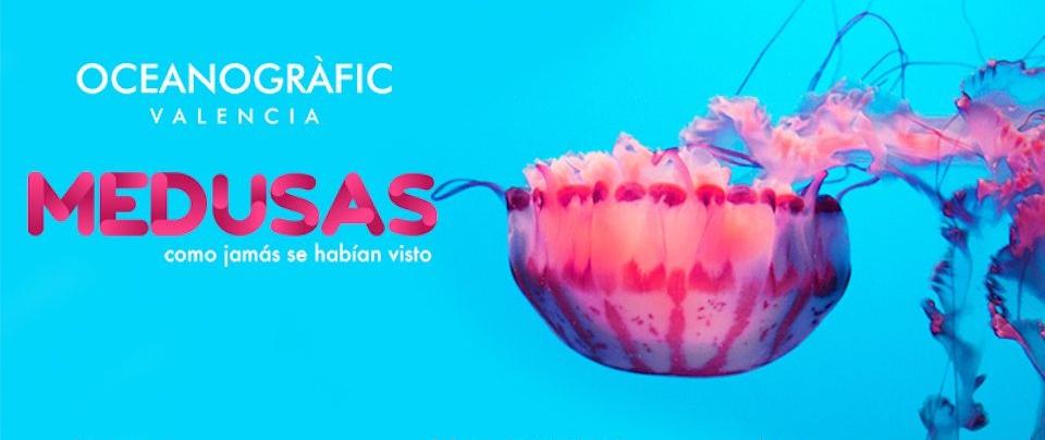 Oceanogràfic Medusas como jamás se habían visto