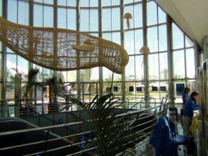 Medusas Voladoras de varetas de madera en el Oceanogràfic
