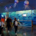 Medusas Voladoras de papel de Empaperart en el Oceanogràfic de Valencia