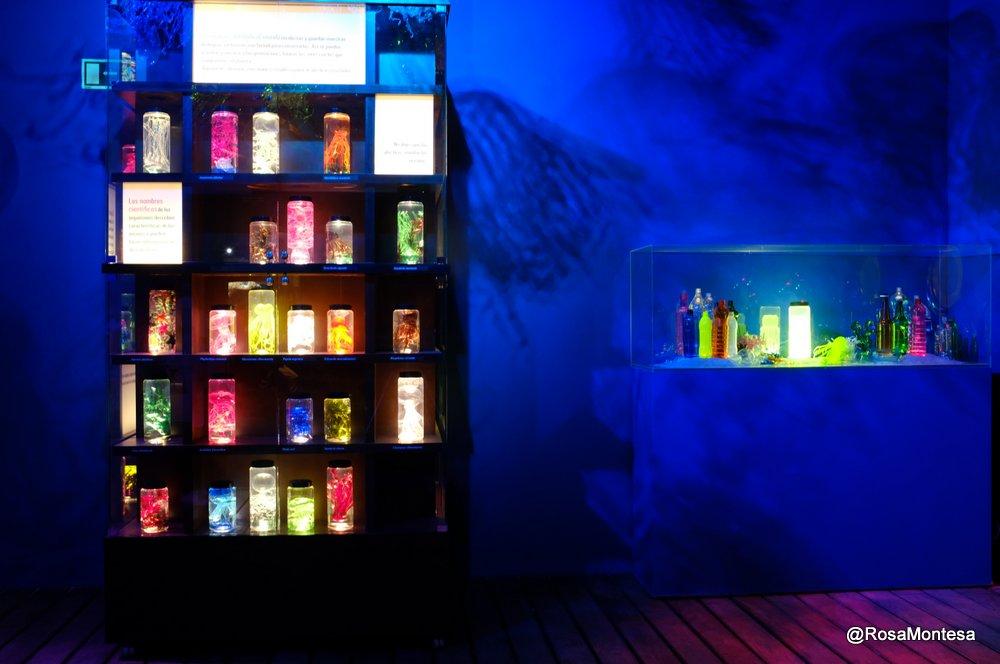 Laboratorio de especies marinas con botellas de plástico PET