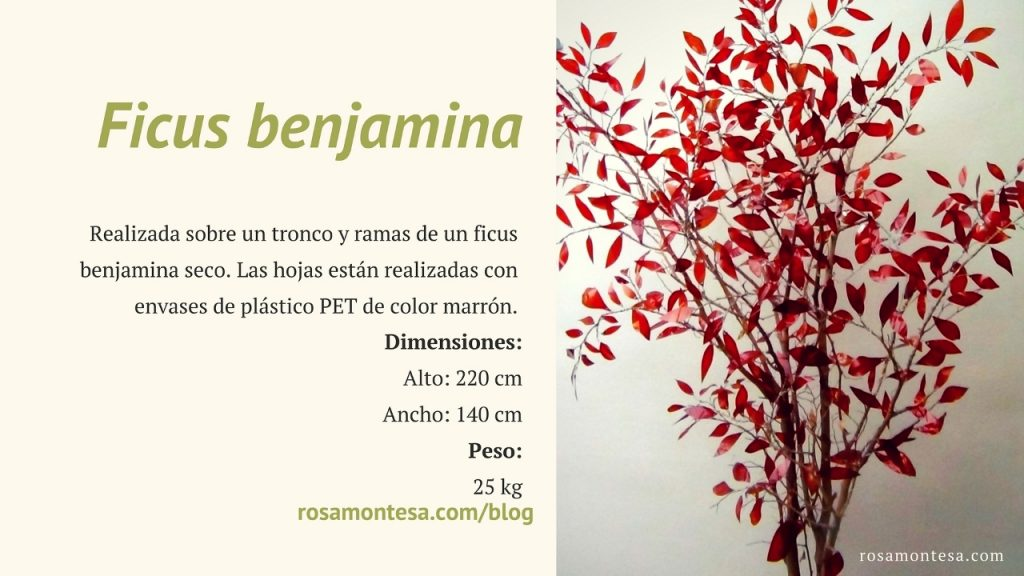 Ficus Benjamina. Naturaleza Plástica por Rosa Montesa. Reciclado Creativo