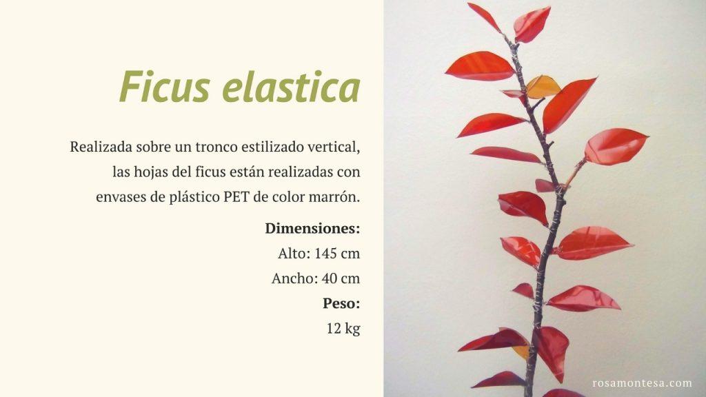 Ficus Elastica. Naturaleza Plástica por Rosa Montesa. Reciclado Creativo