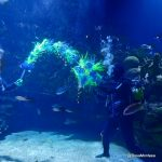Estrella Belén botellas plástico Oceanogràfic 2018 Rosa Montesa Reciclado Creativo